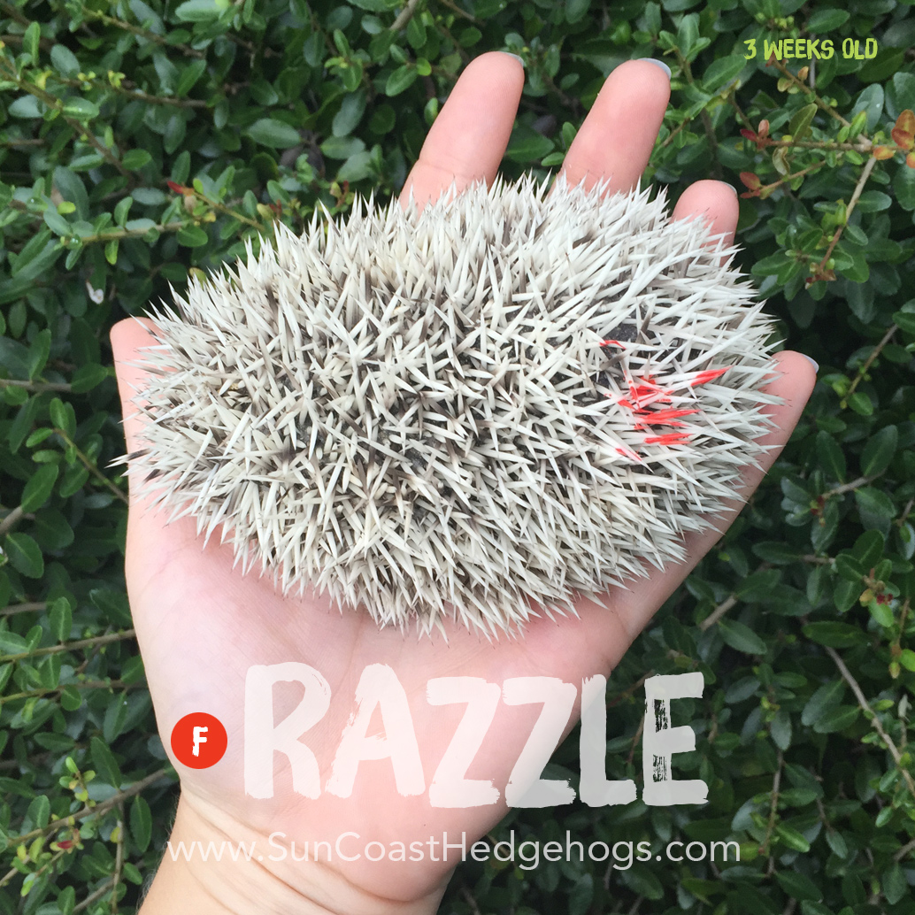 More pictures of Razzle