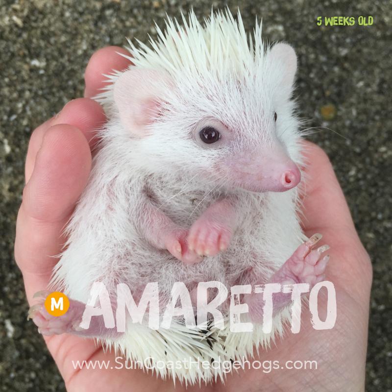 More pictures of Amaretto
