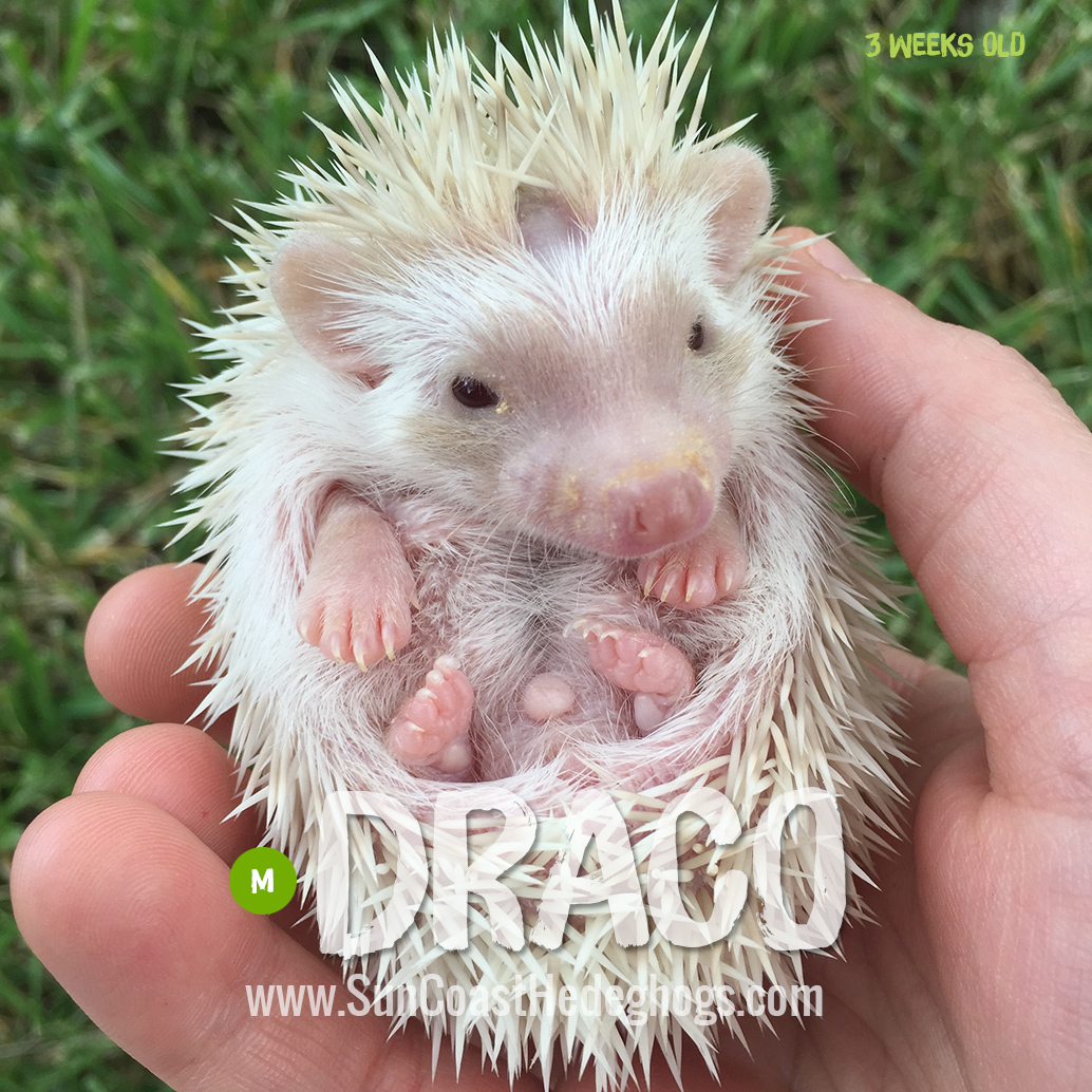 More pictures of Draco