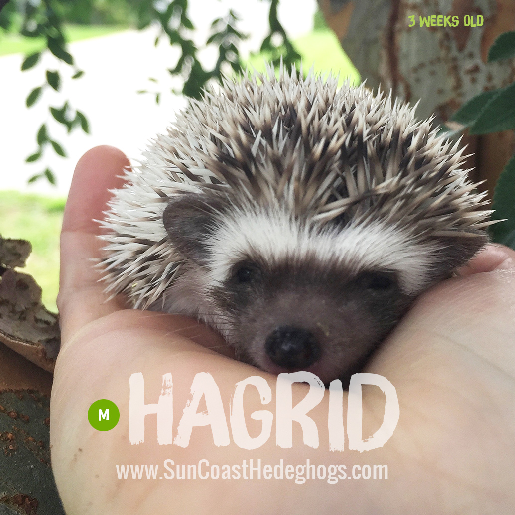 More pictures of Hagrid