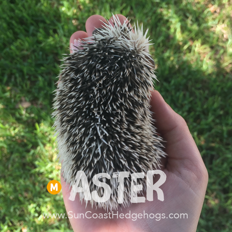 More pictures of Aster