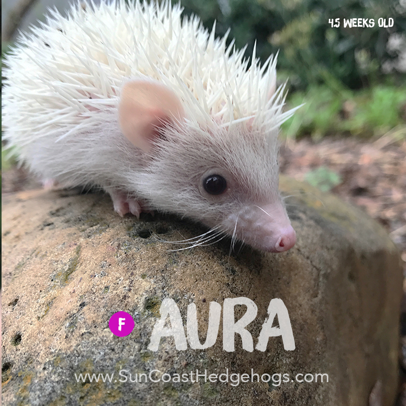 More pictures of Aura