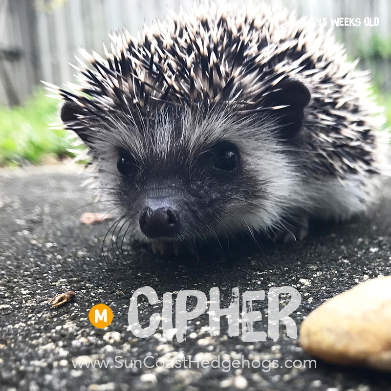More pictures of Cipher