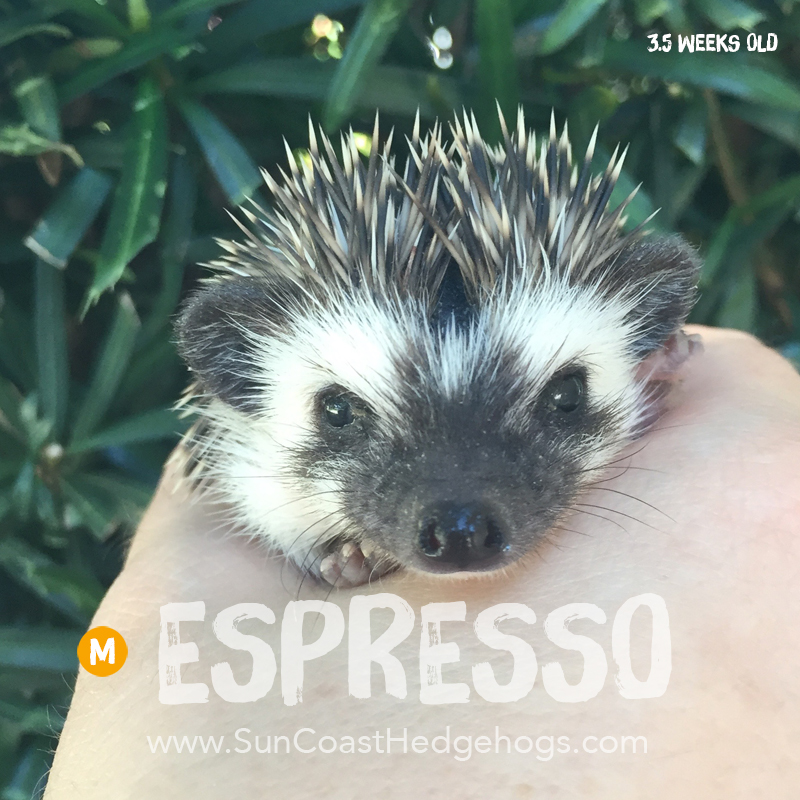 More pictures of Espresso