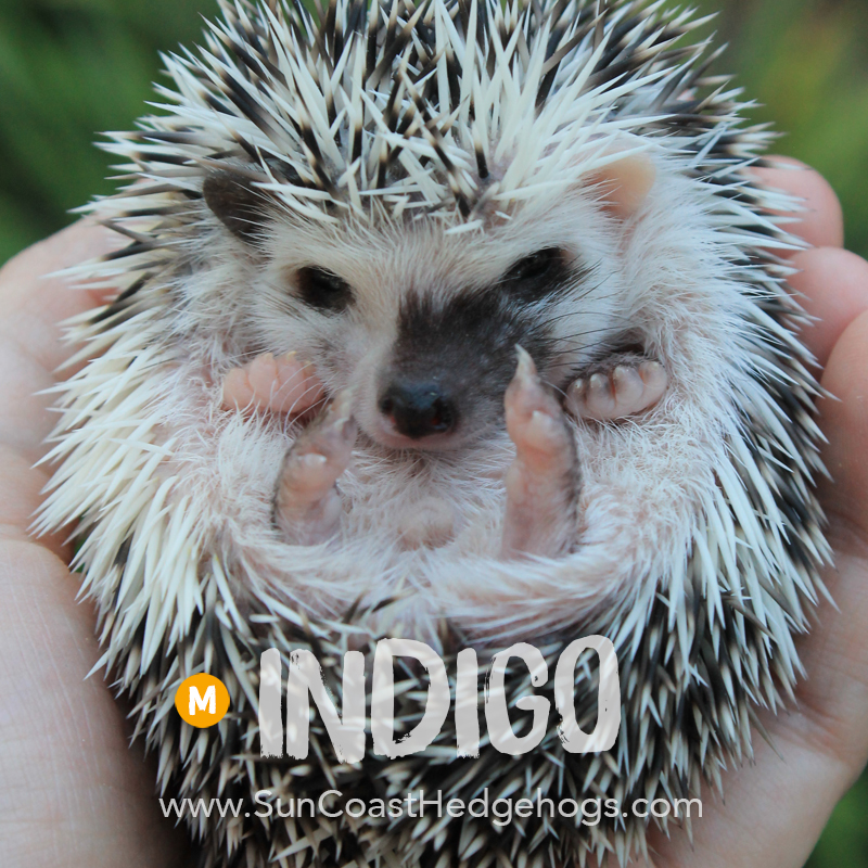 More pictures of Indigo