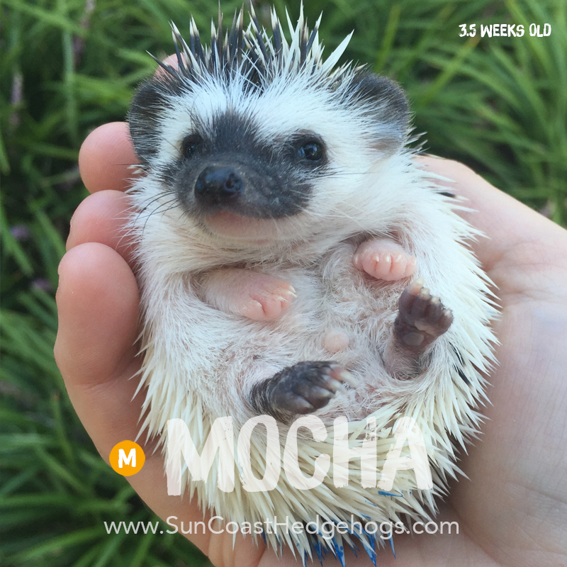 More pictures of Mocha