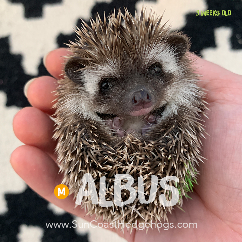 More pictures of Albus