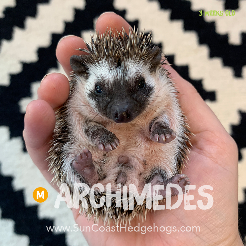More pictures of Archimedes