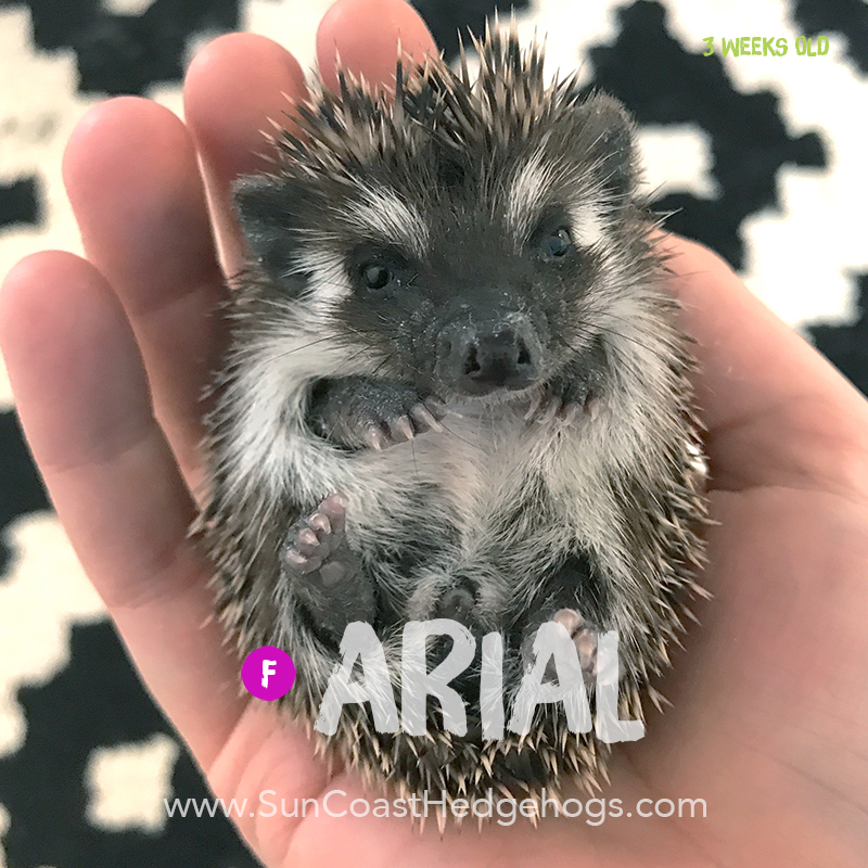 More pictures of Arial