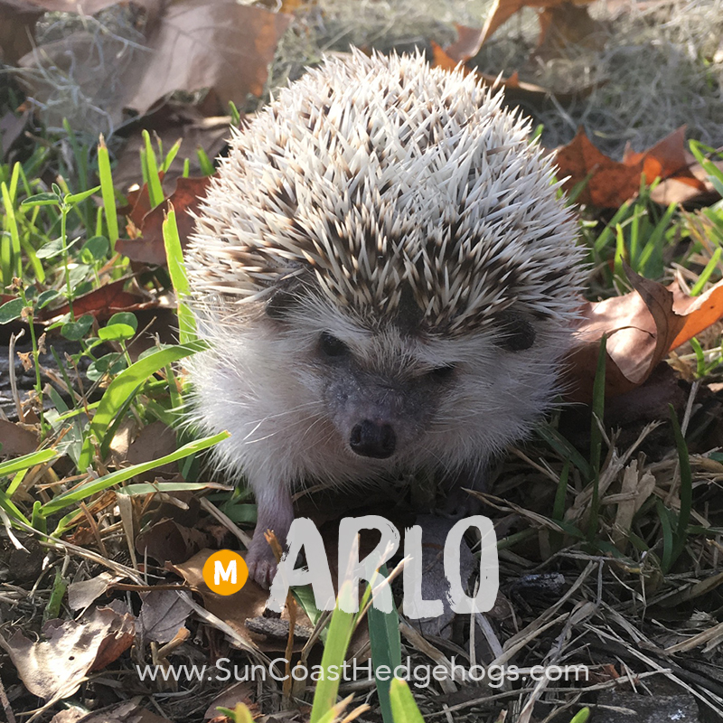 More pictures of Arlo