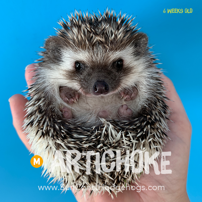 More pictures of Artichoke