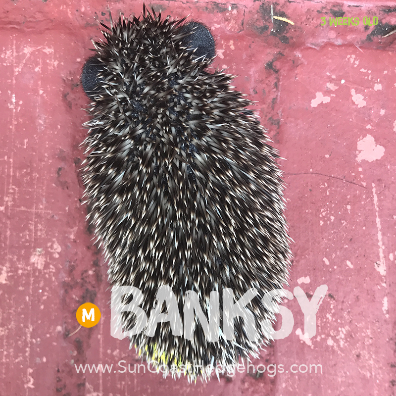 More pictures of Banksy