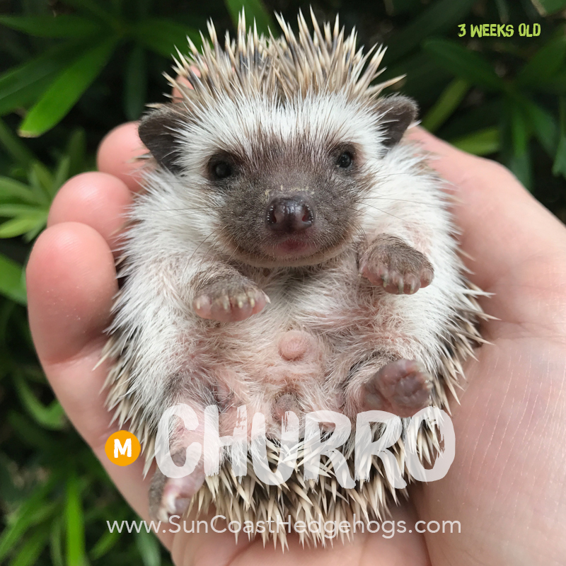 More pictures of Churro