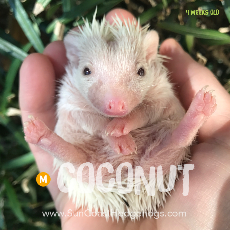 More pictures of Coconut