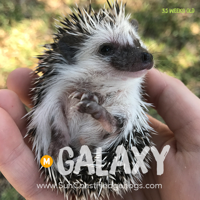 More pictures of Galaxy