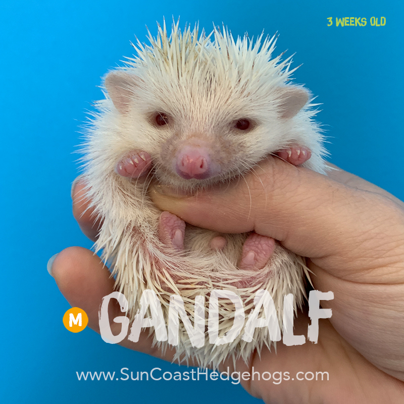More pictures of Gandalf