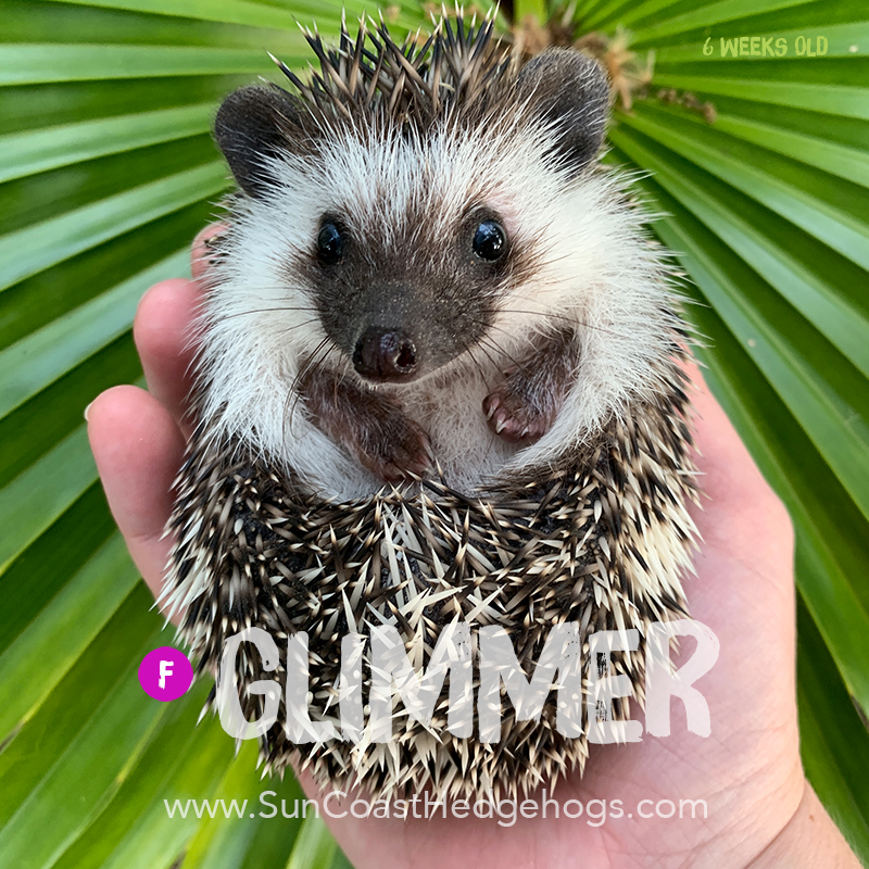 More pictures of Glimmer