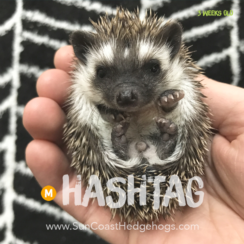 More pictures of Hashtag
