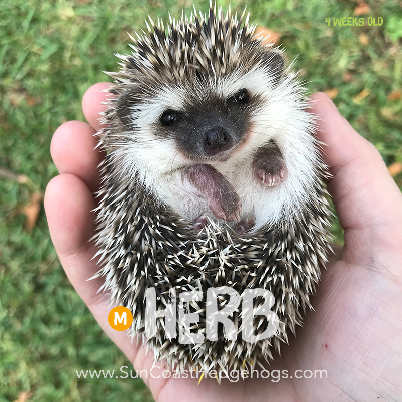 More pictures of Herb