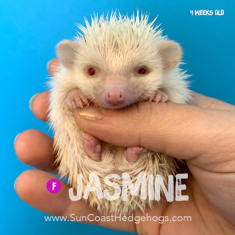 More pictures of Jasmine