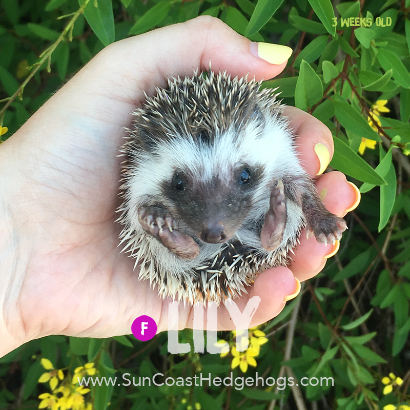 More pictures of Lily