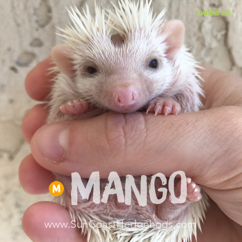More pictures of Mango