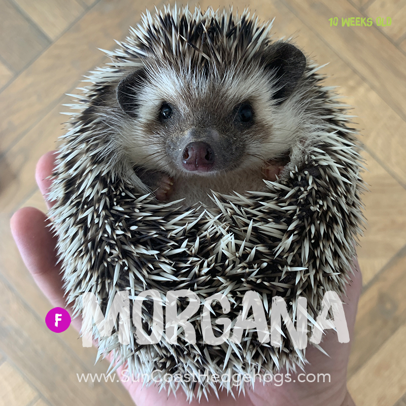 More pictures of Morgana