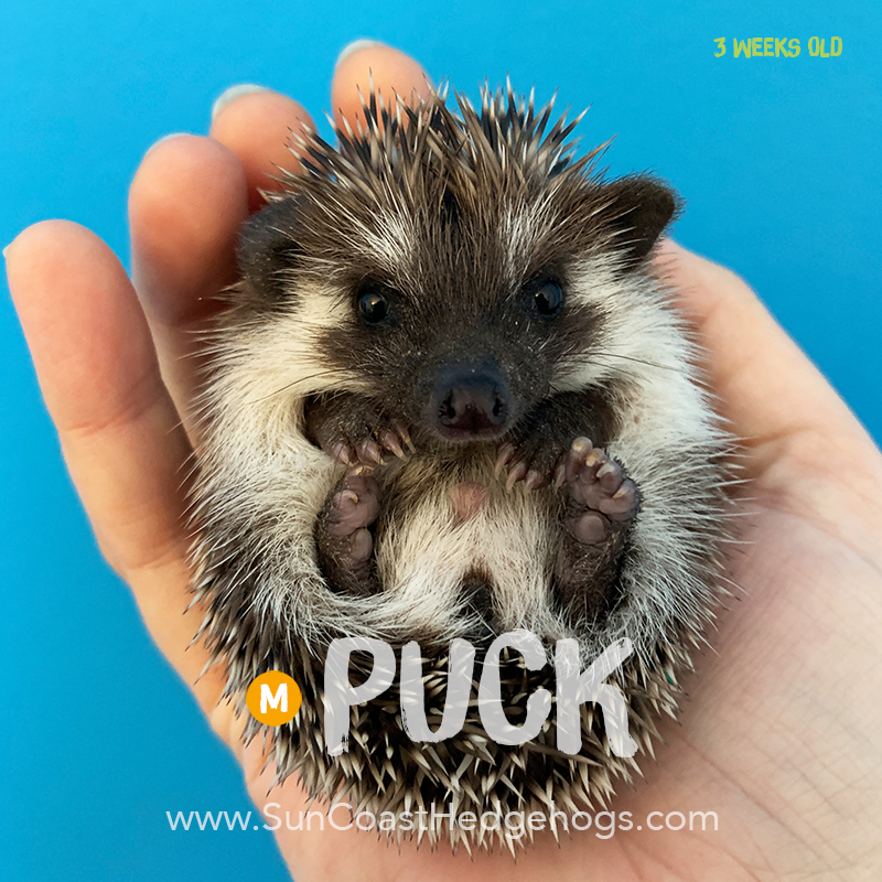 More pictures of Puck