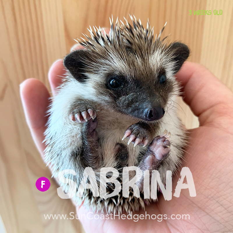 More pictures of Sabrina