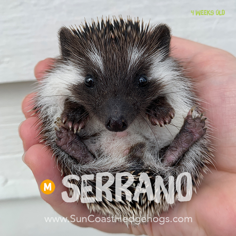 More pictures of Serrano