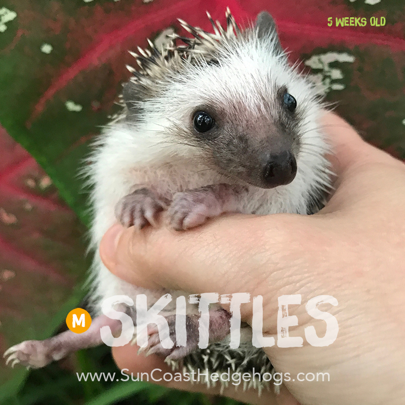 More pictures of Skittles