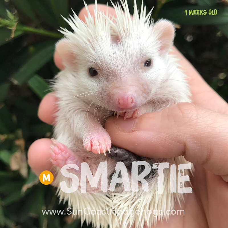 More pictures of Smartie
