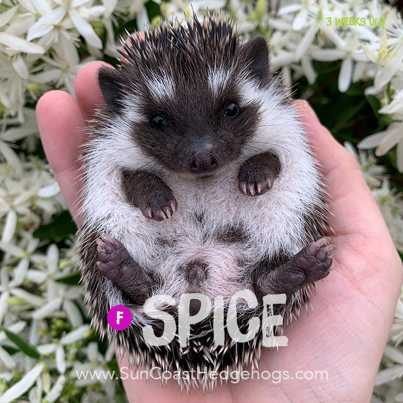 More pictures of Spice