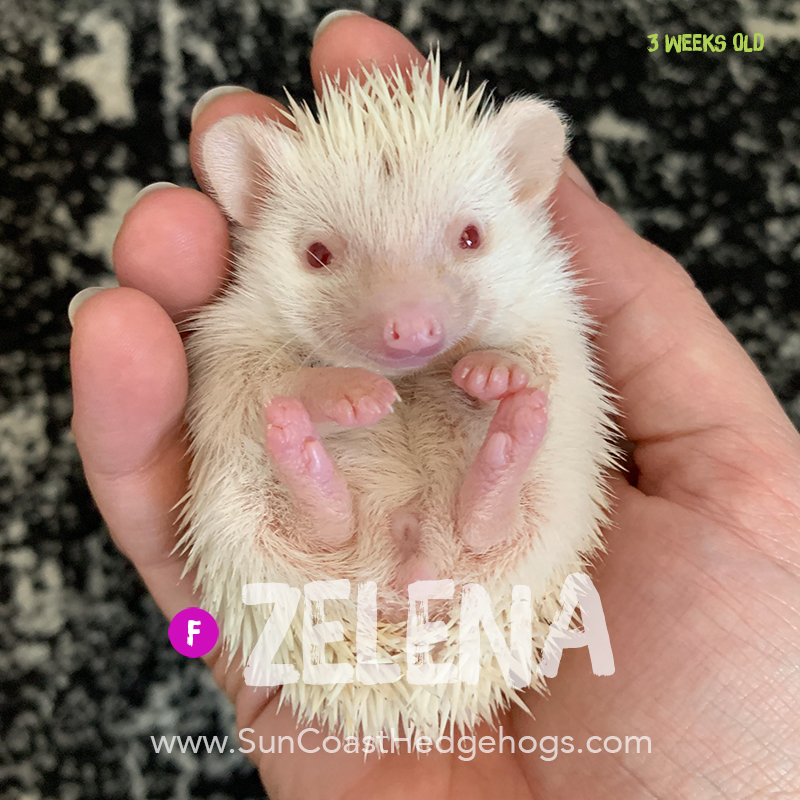 More pictures of Zelena