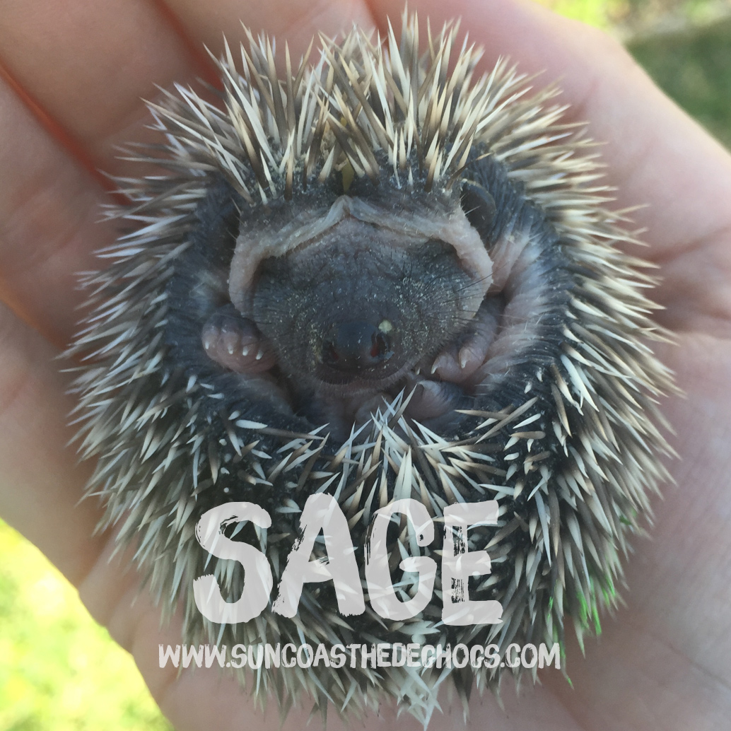 More pictures of Sage