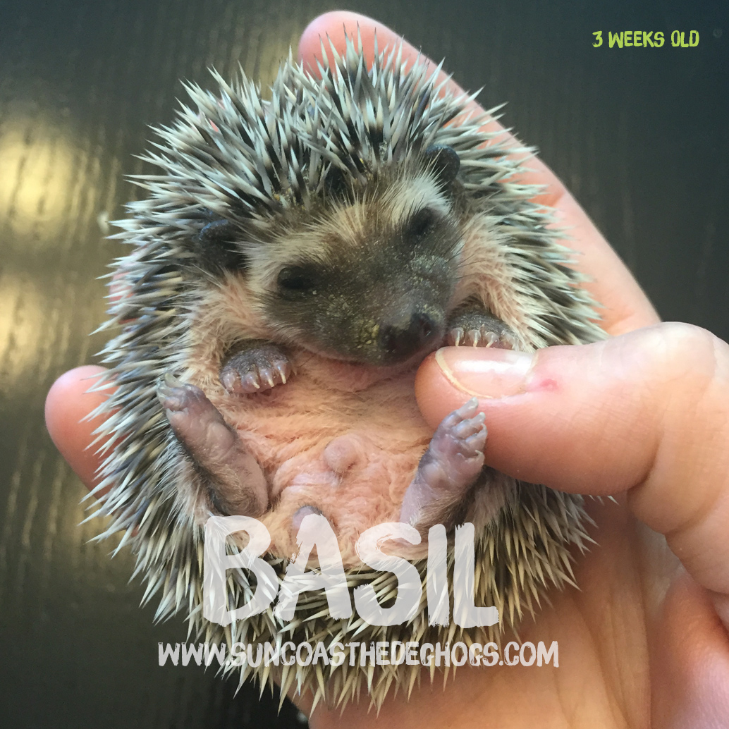 More pictures of Basil