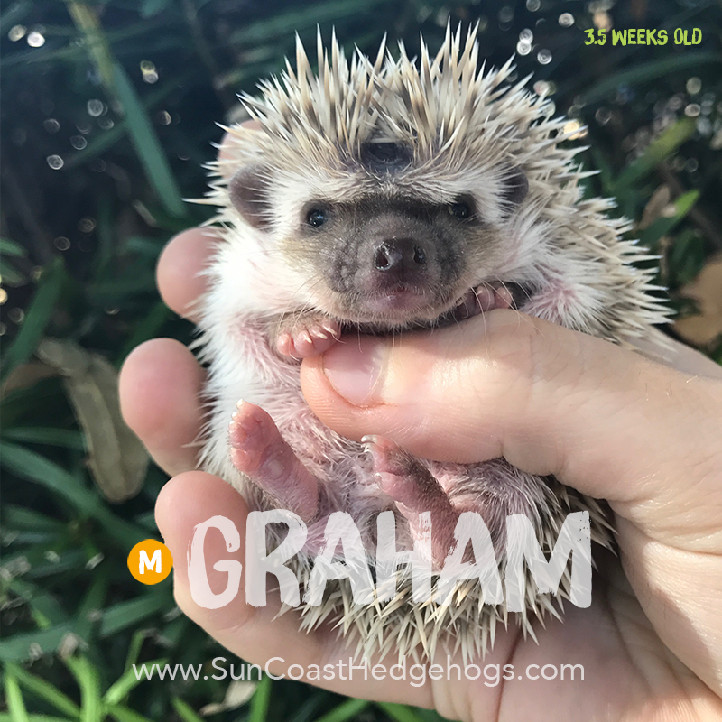 More pictures of Graham