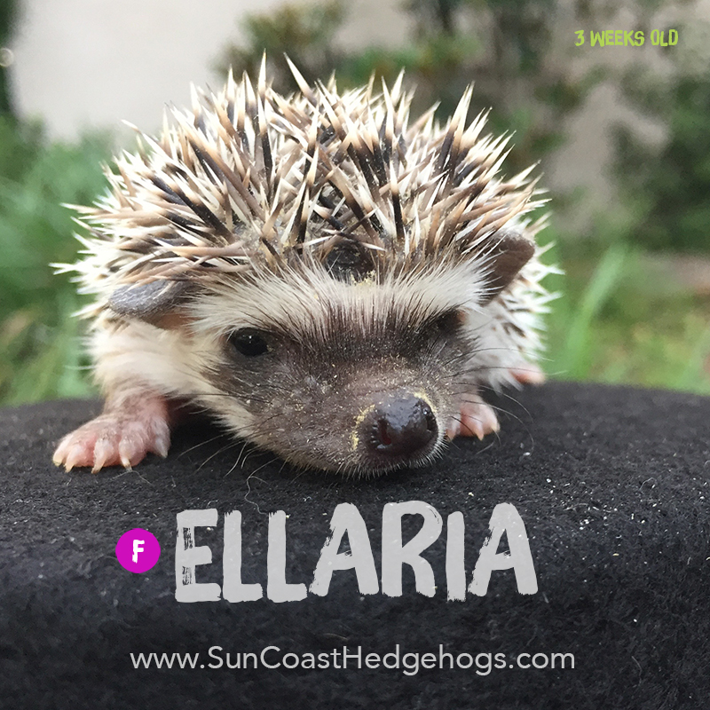 More pictures of Ellaria