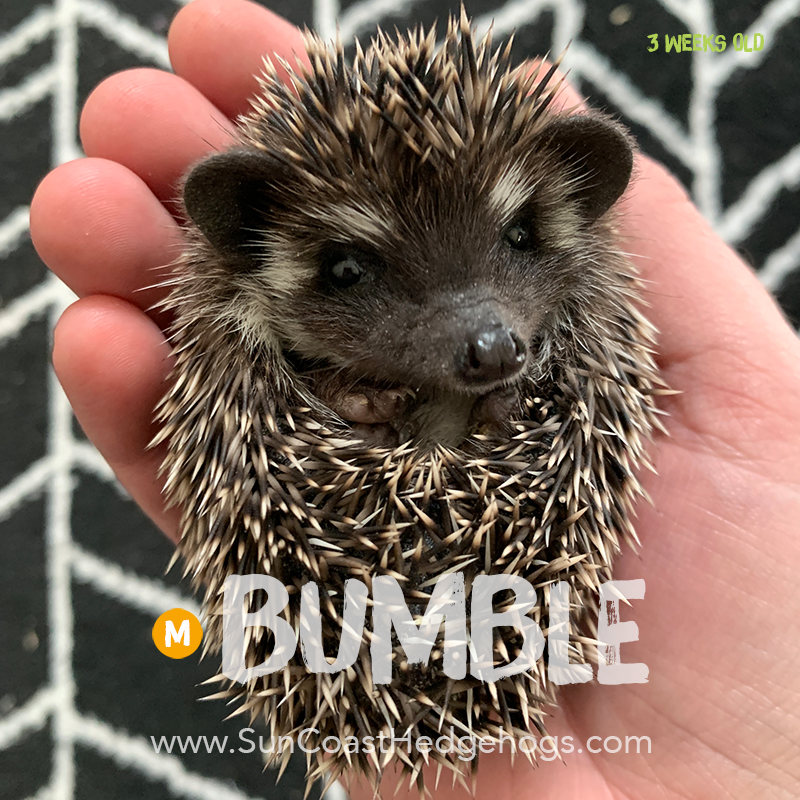 More pictures of Bumble