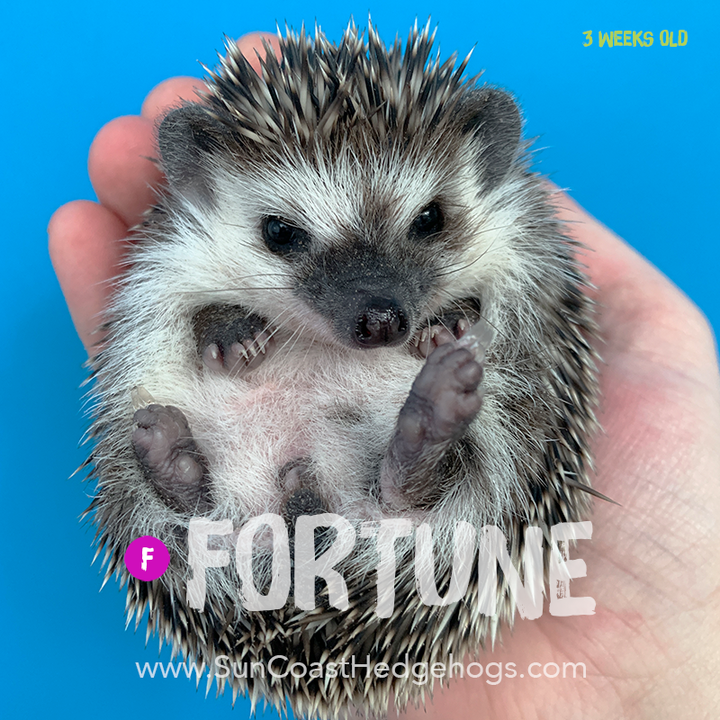 More pictures of Fortune
