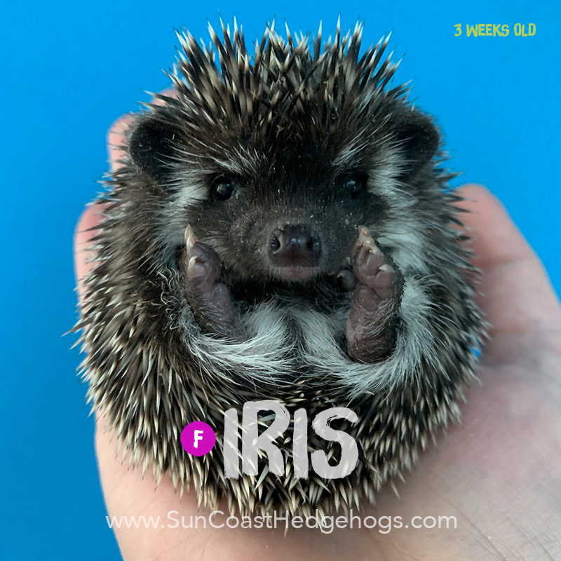 More pictures of Iris
