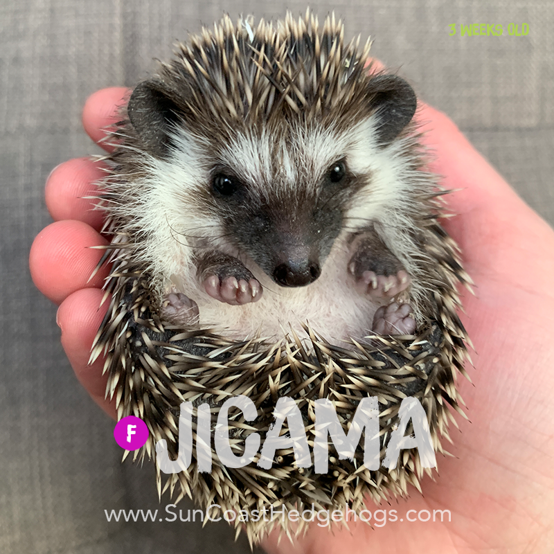 More pictures of Jicama