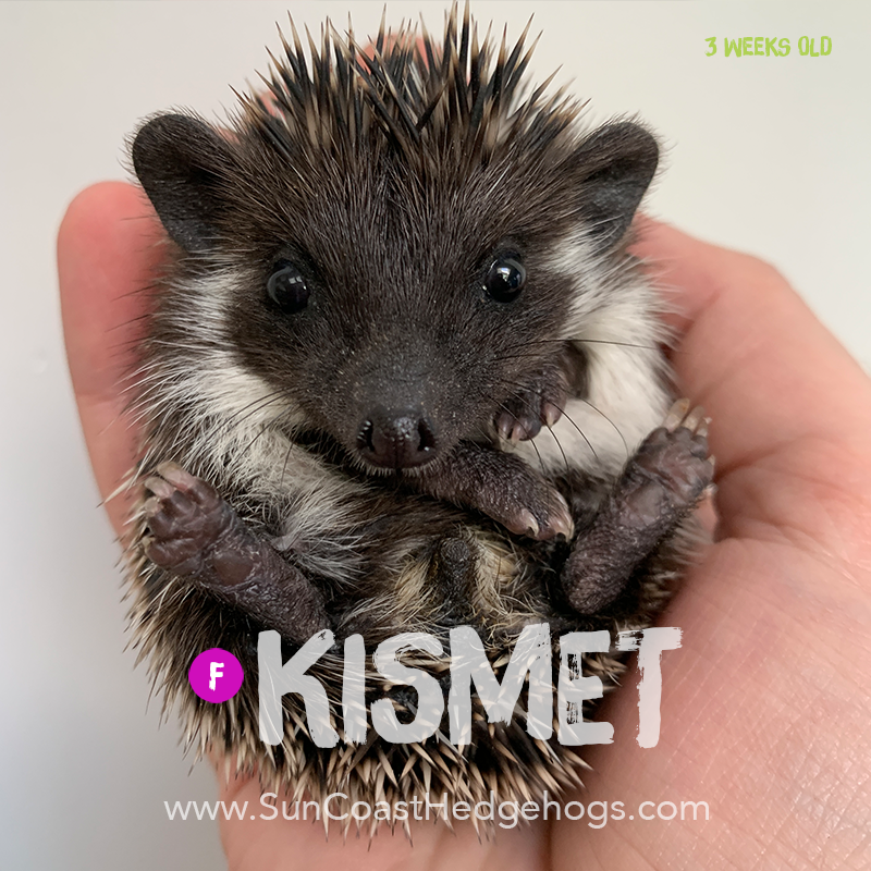 More pictures of Kismet