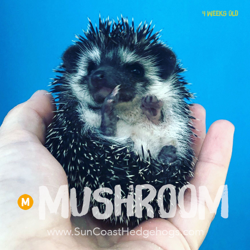 More pictures of Mushroom