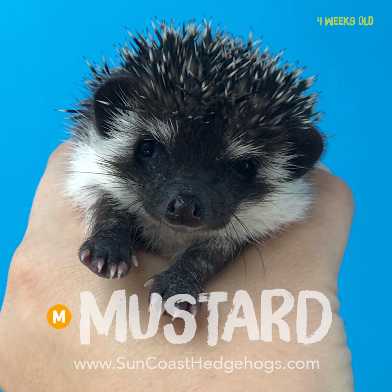 More pictures of Mustard