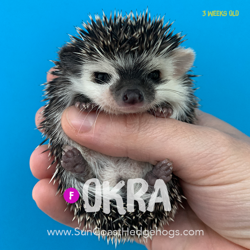 More pictures of Okra