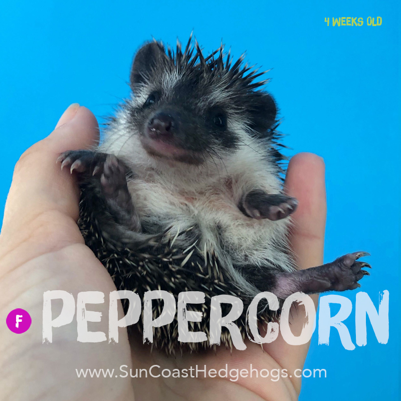 More pictures of Peppercorn