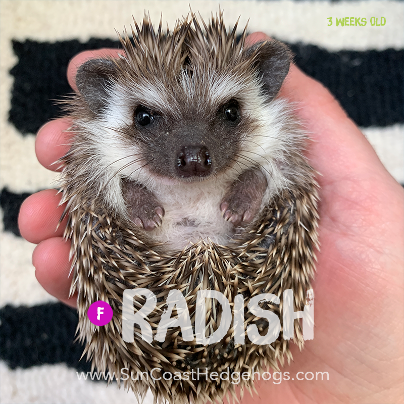 More pictures of Radish