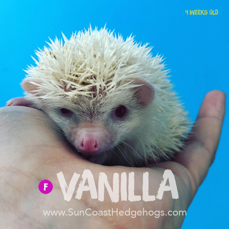 More pictures of Vanilla