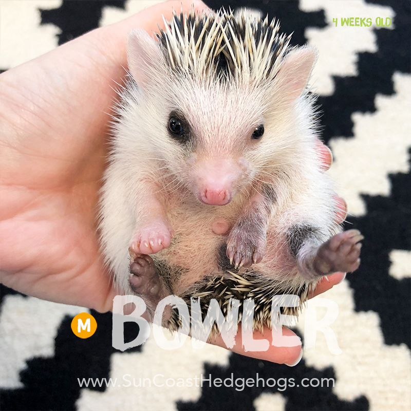 More pictures of Bowler